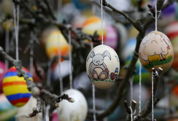 Easter eggs adorn an apple tree in the garden of the summerhouse of German pensioners Christa and Volker Kraft in  Saalfeld